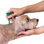 What To Know About Fleas And Ticks