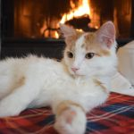 Keeping-Your-Pet-Safe-this-Winter