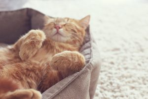 Why and How Cats Have Seizures