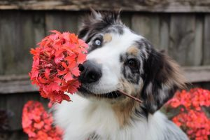 Protecting Your Pets From Dangerous Plants